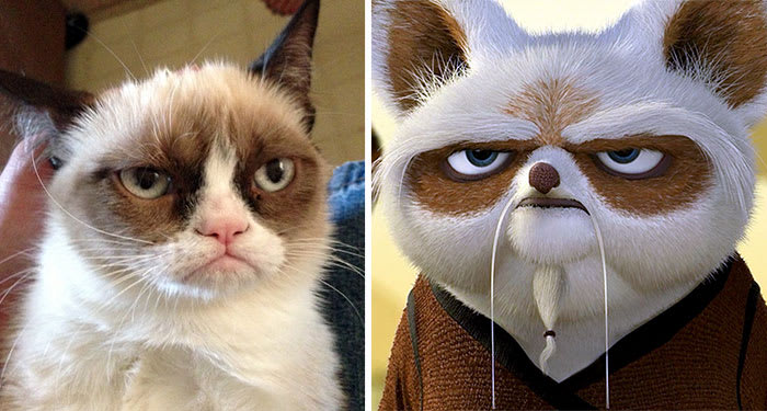 Master Shifu From Kung Fu Panda
