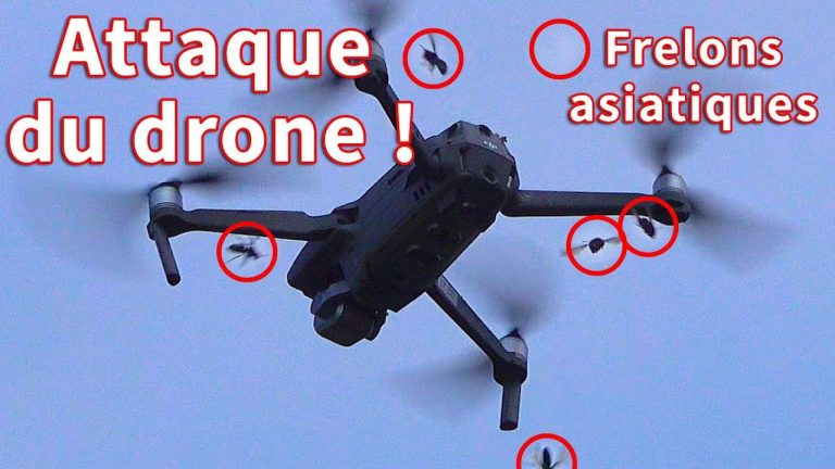 Un drone se fait attaquer par des frelons asiatiques
