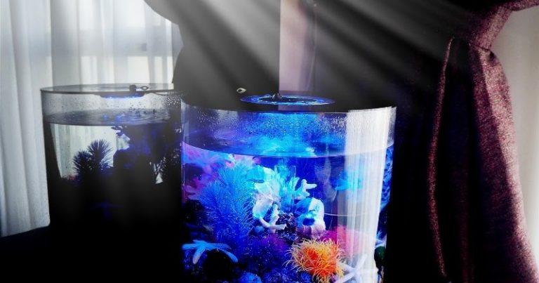 Examen de l'aquarium à tube biOrb OASE avec éclairage LED